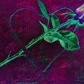 Roped Heart by Dawn Van Doorn