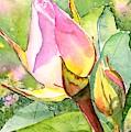 Rose Buds In The Garden by Carlin Blahnik CarlinArtWatercolor