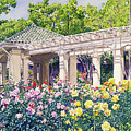 Rose Garden Beauty by David Lloyd Glover