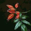 Rose Hip by Go Van Kampen