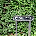Rose Lane by Nicholas Blackwell