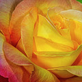 Rose Shades And Swirls by Susan Candelario