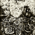 Roses In Sepia by Sharon Popek