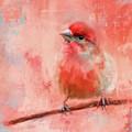 Rosey Cheeks by Jai Johnson