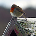 Round Robin by Phil Banks