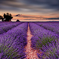 Rows Of Happiness by Jorge Maia