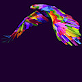 Rubino Hawk Eagle Bird Flying by Tony Rubino
