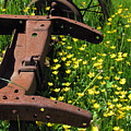 Rusted Wagon In A Field Of Flowers by Roberta Byram
