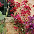 Rustic Life - Flowers by Catalina Lira