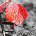 Rusty Leaves by Robert Daradics