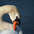 S For Swan by Karol Livote
