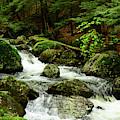 Sages Ravine 1 by Raymond Salani III