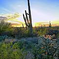 Saguaro Radiance by Chance Kafka
