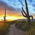 Saguaro Trail by Chance Kafka