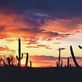 Saguaros Watch The Sunset by Chance Kafka