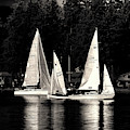 Sails Up by David Patterson
