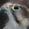 Saker Falcon - Art by Sue Harper