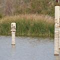 Salt Covered Runes In Salton Sea by Colleen Cornelius