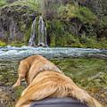 Salt Creek Falls By Photo Dog Jackson by Matthew Irvin