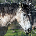Salt River Wild Horse 3737-020119 by Tam Ryan