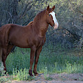 Salt River Wild Horse 5136-022619-2 by Tam Ryan