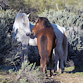 Salt River Wild Horses 5164-022619-2 by Tam Ryan