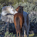 Salt River Wild Horses 5165-022619-2 by Tam Ryan