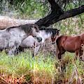 Salt River Wild Horses by Elaine Malott