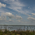 Salt Water Cattails by Dale Powell