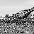 San Francisco Giants Baseball Ballpark Fan Lot Giant Glove And Bottle 5d28246 Bw by Wingsdomain Art and Photography