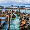 San Francisco Pier 39 by Christopher Arndt