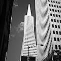 San Francisco - Transamerica Pyramid Bw by Frank Romeo