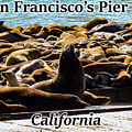 San Francisco's Pier 39 Walruses 1 by G Matthew Laughton