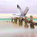 Sandhill Crane And Old Dock by Laura D Young