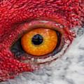 Sandhill Crane Eye by Zina Stromberg