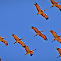 Sandhill Cranes In Flight by Randy J Heath