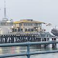 Santa Monica Pier And Pigion  by John McGraw