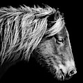 Sarah's Sweat Tea Portrait In Black And White by Assateague Pony Photography