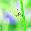 Say Hello To My Little Green Insect Friend by Don Northup