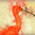 Scarlet Ibis by Max Huber