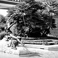 Sculpture Getty Villa Black White  by Chuck Kuhn