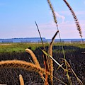 Sea Grass At The Marsh by Lisa Wooten