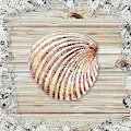 Sea Shell Beach House Rustic Chic Decor V by Irina Sztukowski