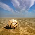 Sea Shell by Joye Ardyn Durham