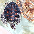 Sea Turtle by Alyssa B. Young