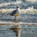 Seagull By The Seashore by Lois Bryan