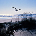Seagull Flying Over Beach by Colorstock