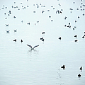 Seagulls And Ducks At Lake Constance by Rolfo