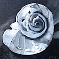 Seashell Painting In Black And White by Donna Tuten