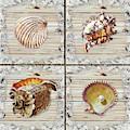 Seashells Beach House Rustic Chic Collection I by Irina Sztukowski